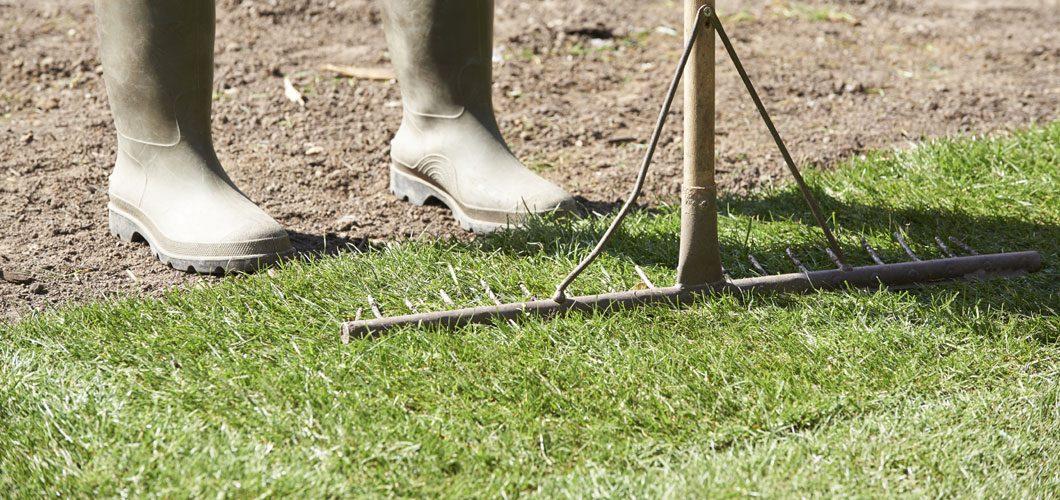 Lawn Scarifying Service