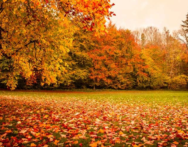 Autumn lawn care Norfolk