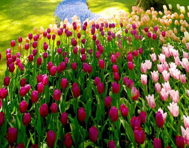 Summer lawn care Norfolk
